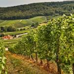 12. juni – Smagning af sydafrikanske vine